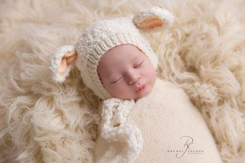 Little lamb newborn